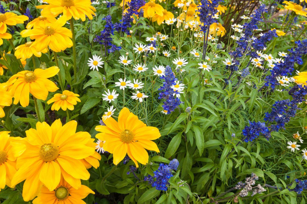 Rogge Gartengestaltung Holzgerlingen Was Im August Im Garten Zu